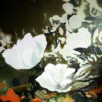magnolia_507